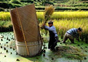 التنمية الخضراء في الصين.. كيف عززت بكين مكانتها الزراعية؟