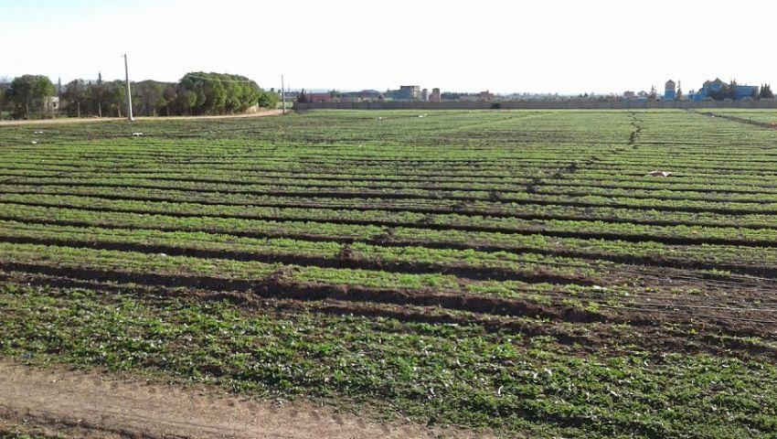 في 10 نقاط.. هذه توصيات «الزراعة» لحماية المحاصيل من الأمطار الغزيرة