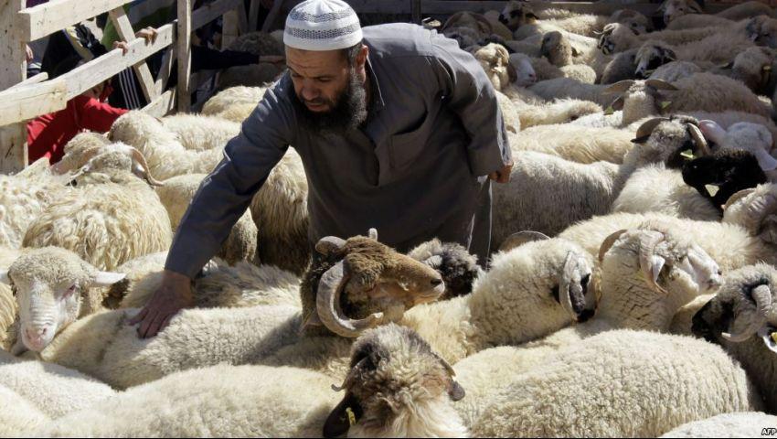 قبل شراء الأضحية.. «الزراعة » تقدم 13 نصيحة للتأكد من سلامتها