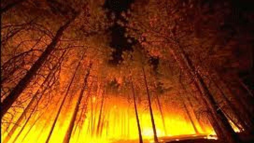 السيطرة على حريق هائل في غابات جنوب تركيا