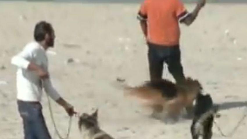 فيديو.. فلسطيني يدرِّب كلابه لإنقاذ الغرقى