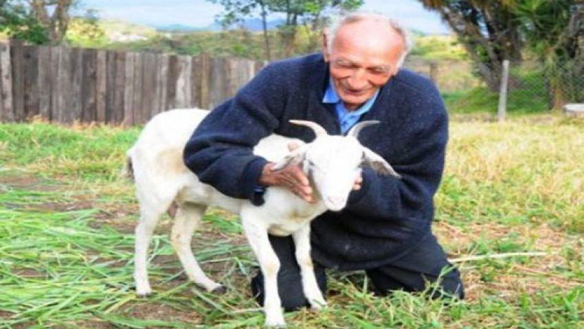 عجوز برازيلي يتزوج عنزة