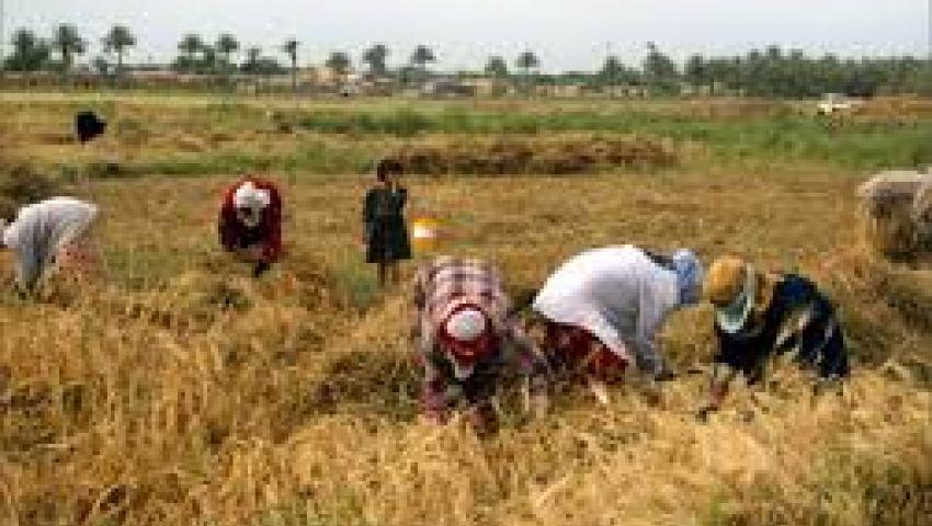 نائب السلع التموينية: القمح يكفي لـ نوفمبر