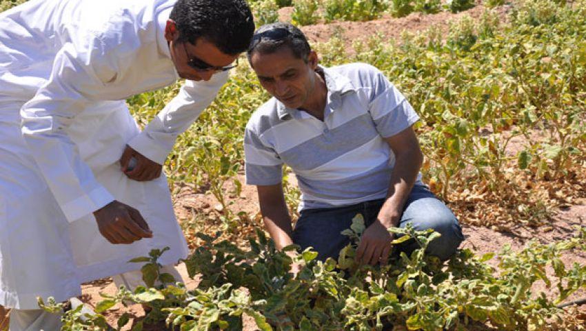 حملة ضخمة لنشر الوعي السياحي بين بدو سيناء