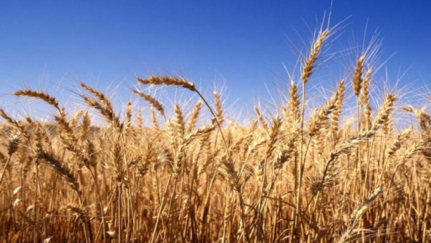 35.9 مليون طن محصول القمح بفرنسا