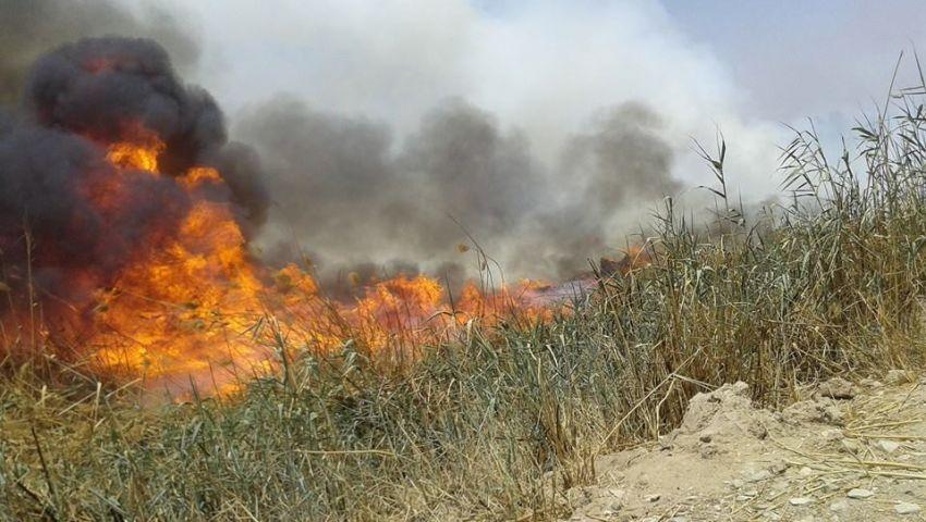 بالصور   اشتعال النيران بالغابات الشجرية لشركة مياه قنا