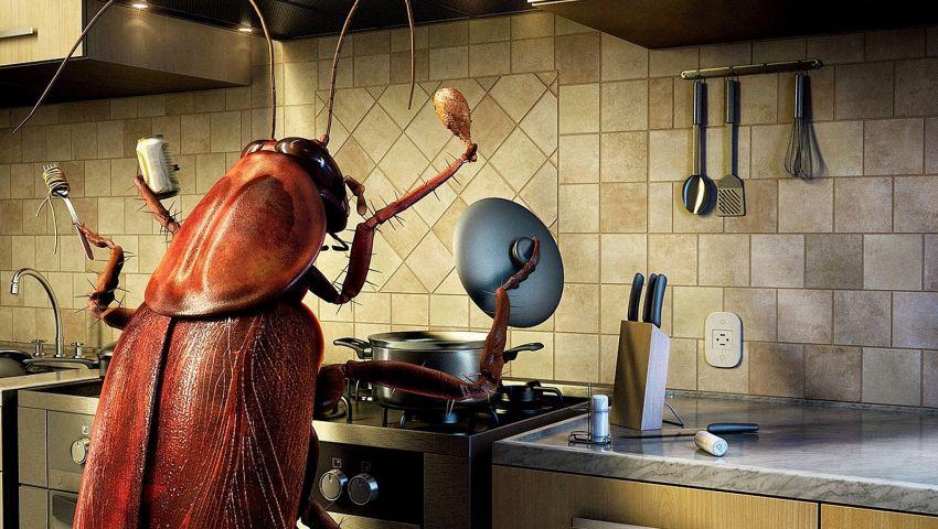 تخلصي من الصراصير بدون مبيدات