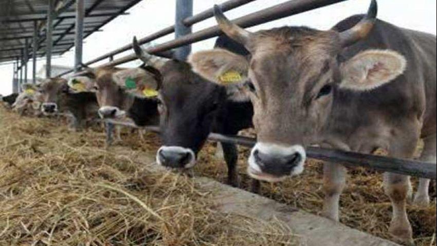 خبراء: عشوائية الاستيراد دمّرت الثروة الحيوانية