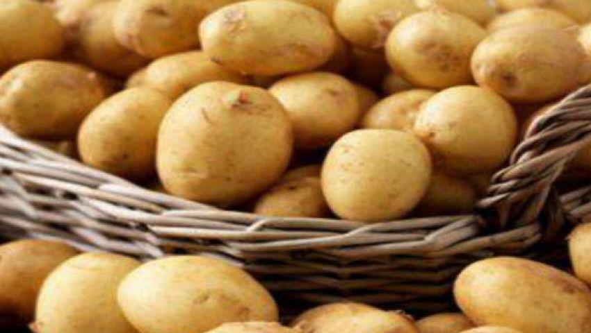بطاطس المنيا تغزو الأسواق الأوروبية