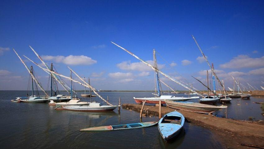 صيد زريعة الأسماك من بحيرة البرلس.. الربح على أنقاض الثروة السمكية