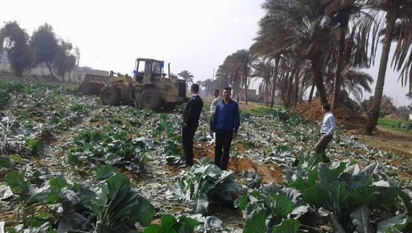 بالصور| إزالة 75 فدانًا زراعيًا روي بمياه الصرف الصحي بالجيزة