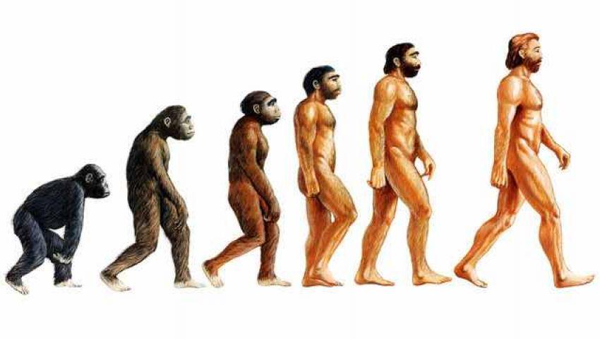 نظرية التطور ببساطة واختصار