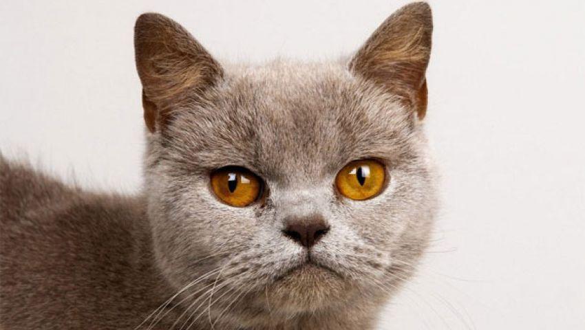 قط يدير بلدة أمريكية طوال 16عامًا