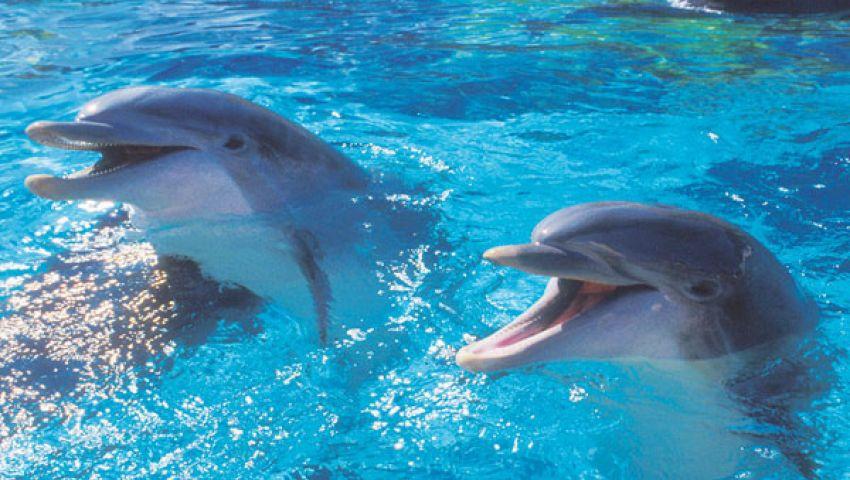 الدلافين تنادي بعضها.. بالأسماء