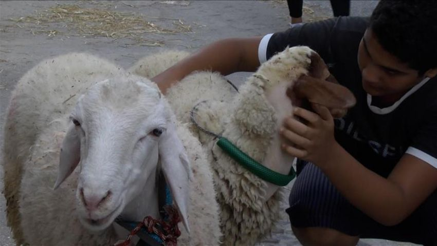 طقوس مغربية غيبها كورونا في عيد الأضحى.. تعرف عليها
