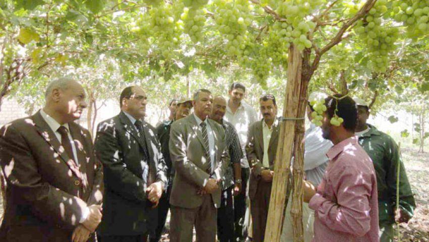 المنيا تصدر 10 آلاف طن عنب و501 ثوم