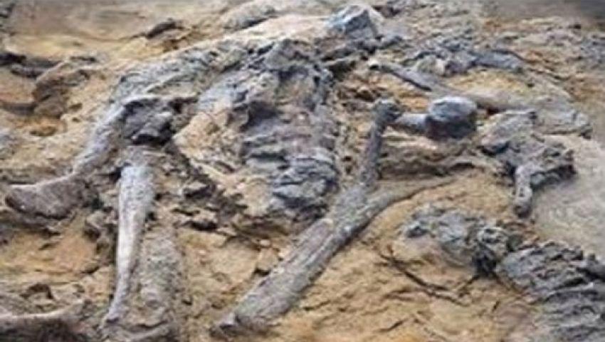 العثور على حفرية متحجرة لأقدم قرد بالصين