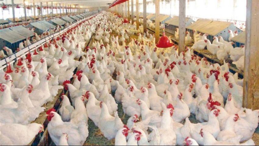 إندونيسيا تعدم 10 ملايين بيضة لرفع أسعار الدواجن