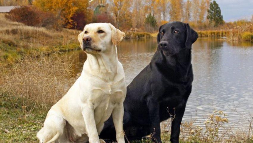 فيديو  بأمر السلطات الإيرانية.. ممنوع اصطحاب الكلاب في الشارع