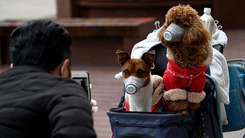 بمدينة هونج كونج.. وفاة أول كلب في العالم بسبب كورونا
