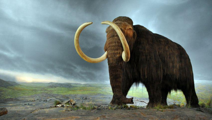 فيلة وقردة على أرض «الفيوم».. تاريخها يعود لـ 40 مليون سنة