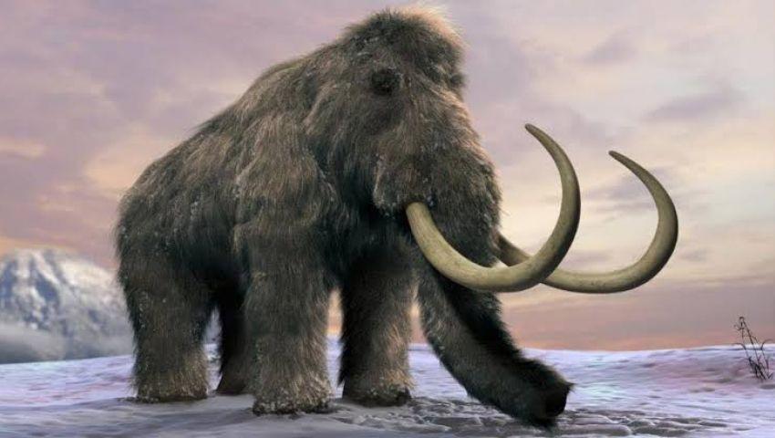 اكتشاف 800 عظمة لحيوان الماموث: عاش قبل 140 قرنًا