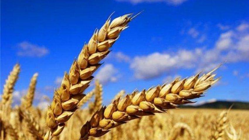 المؤشر العالمي لأسعار الغذاء يواصل تراجعه