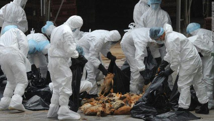 25 حالة.. حصيلة إنفلونزا الطيور بـ10 محافظات في يناير