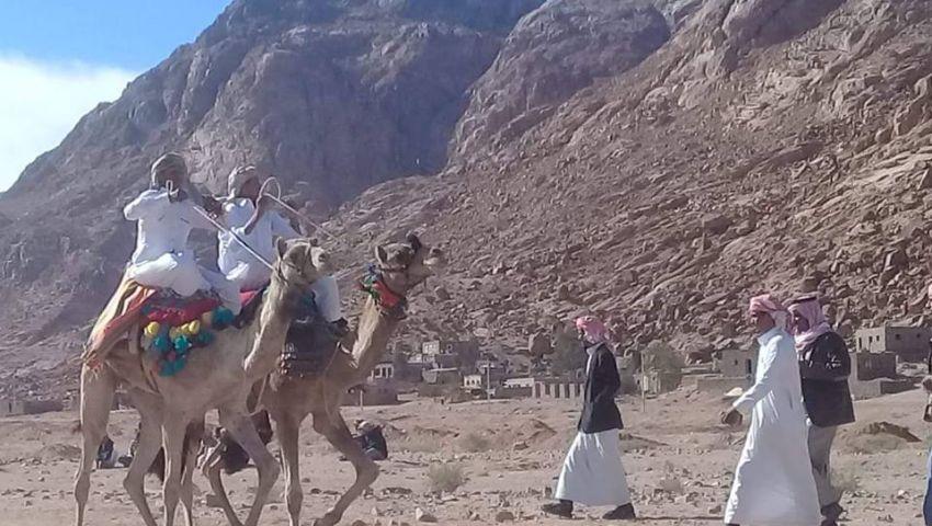 صور   سمر وشعر وجولات بالإبل.. الأعراس السيناوية لم تمسسها الحداثة