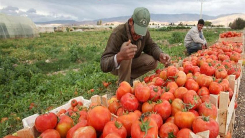 فيديو|  بالأرقام.. صادرات مصر الزراعية من يناير لأبريل