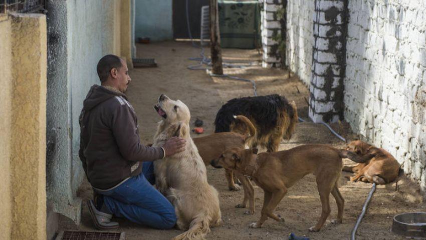 قناة أمريكية: لهذا السبب .. واشنطن حظرت استيراد الكلاب من مصر