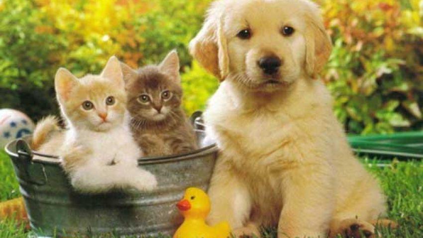 بريطانيا: 3.5 مليار إسترليني أضرار الحيوانات سنويًّا