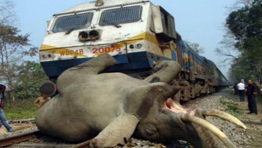 قطار يدهس 5 أفيال في الهند
