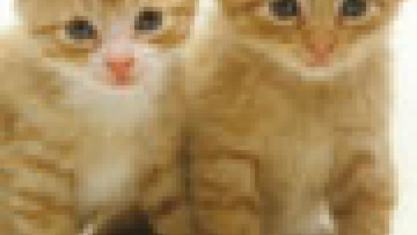 القطط قد تحمل طفيل السل البقرى