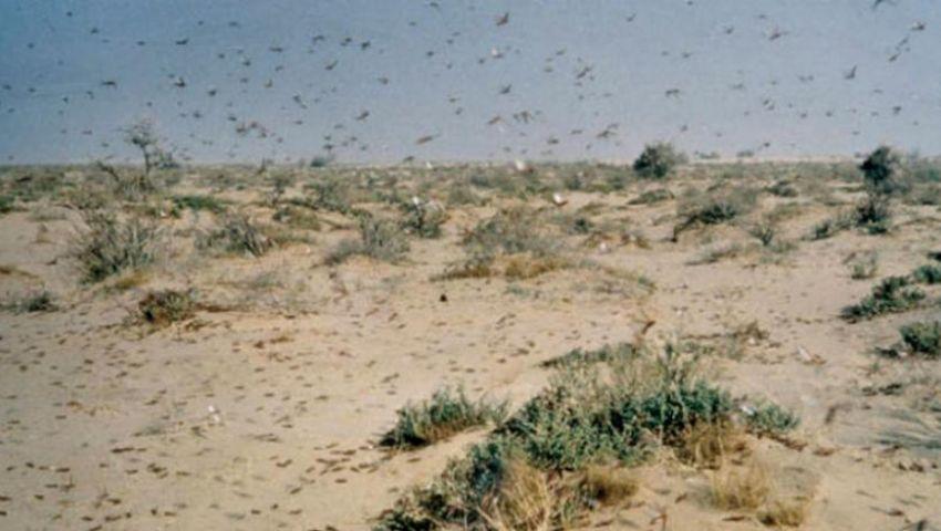 54 قاعدة مصرية حدودية تستعد لصد هجوم الجراد