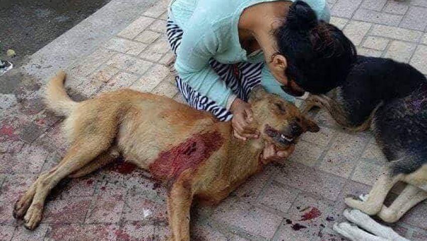 قتل الكلاب الضالة بمصر.. طريقة سهلة يرفضها الأزهر والإفتاء ومنظمات الحيوان