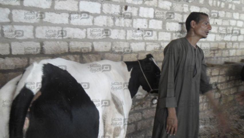 من الكفتة إلى لبن البقرة.. رحلة علاج فيرس سي في مصر