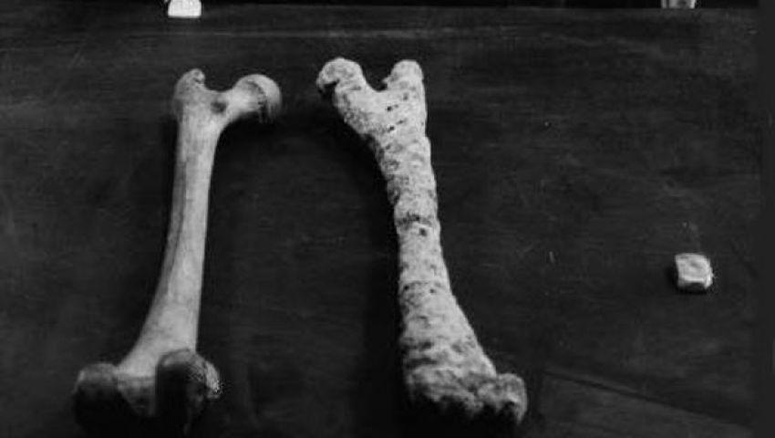 العثور على عظام جواد عاش قبل 500 ألف عام