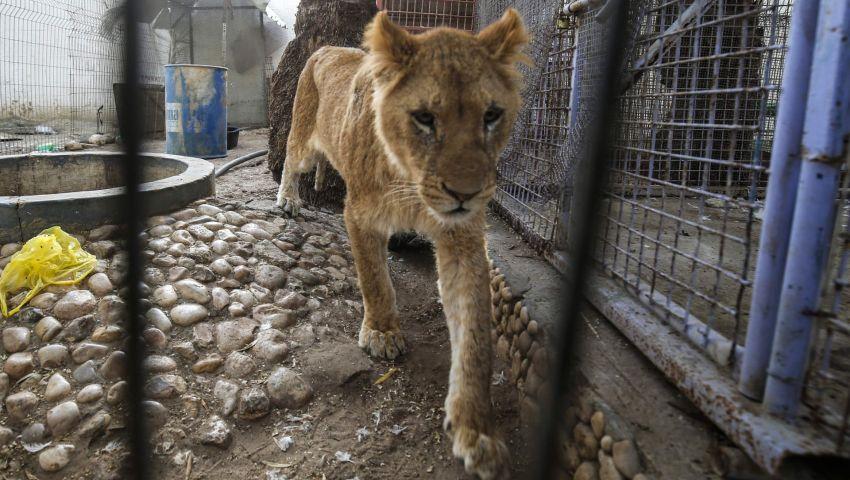 بالصور|حتى الحيوانات رحلت عن غزة بسبب حصار الاحتلال الإسرائيلي