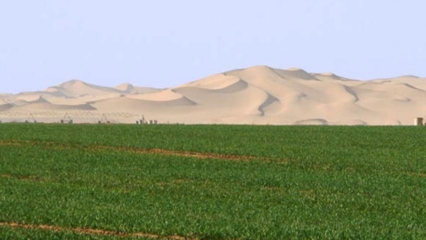الإسماعيلية تصدر محاصيل بقيمة 47.8 مليون دولار