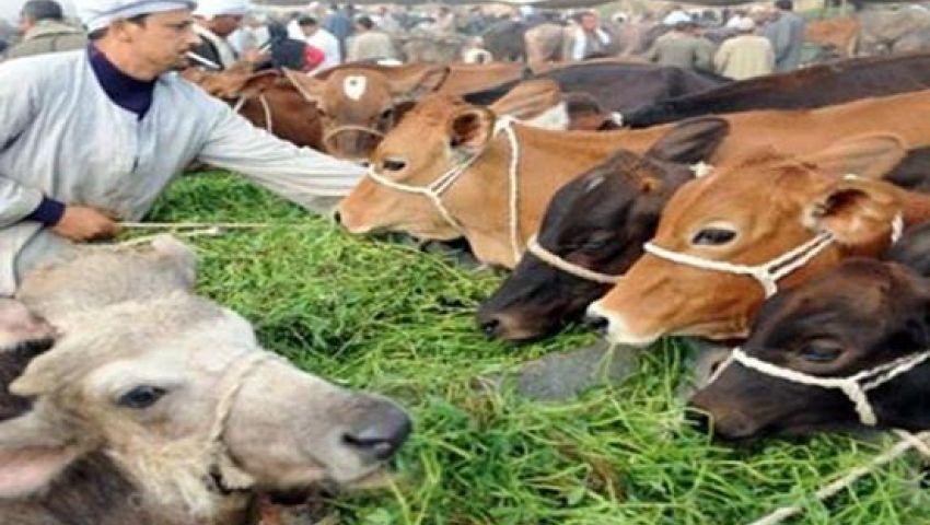10 نصائح للحفاظ على الثروة الحيوانية والداجنة بمصر من ارتفاع الحرارة