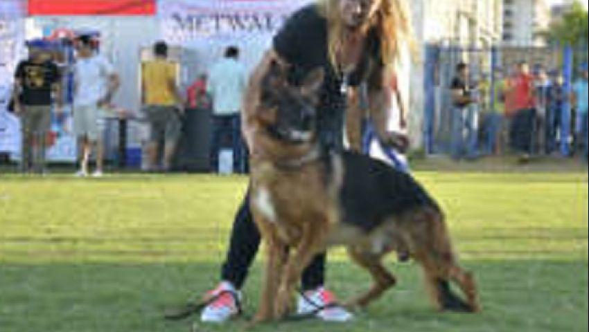 فيديو.. بنت أخت بوتين تشارك في مسابقة أجمل كلب بمصر