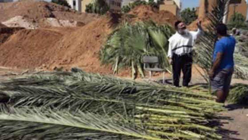 الزراعة: تهريب 3 شحنات سعف لمركز إسرائيلي في نيويورك