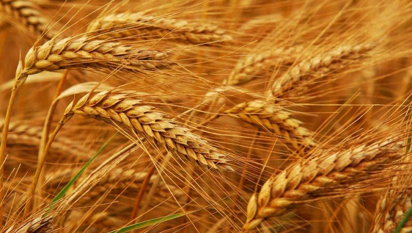 مخاوف التوريد لمصر تقود أسعار القمح الروسي للتراجع