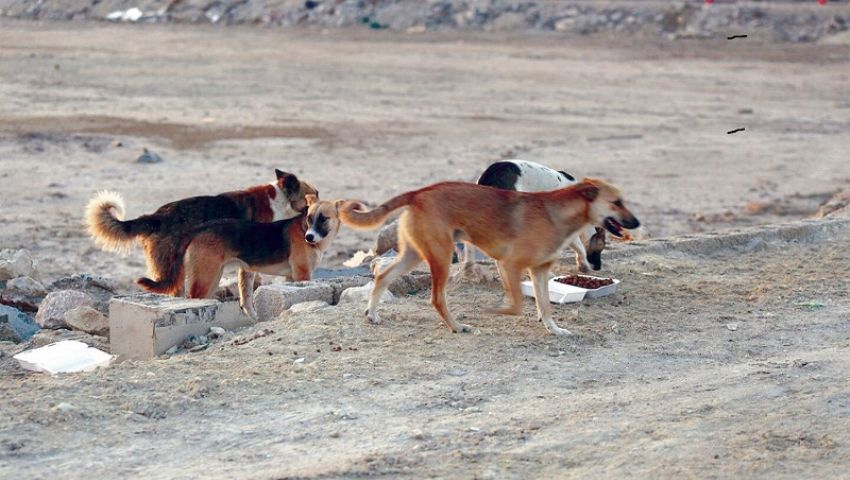 مخاوف من انتشار «إنفلونزا الكلاب».. ونقابة البيطريين: لم نسجل أي حالة حتى الآن