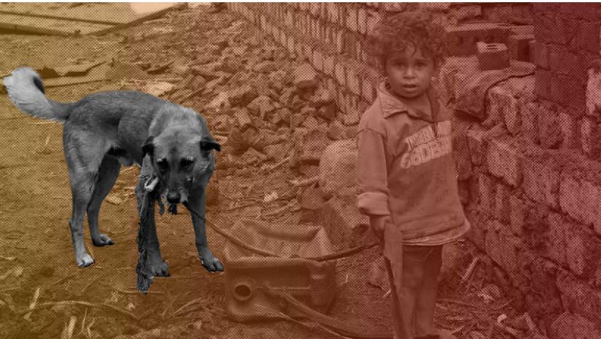 المونيتور: الكلاب الضالة في مصر.. بين الحب والكراهية والخوف
