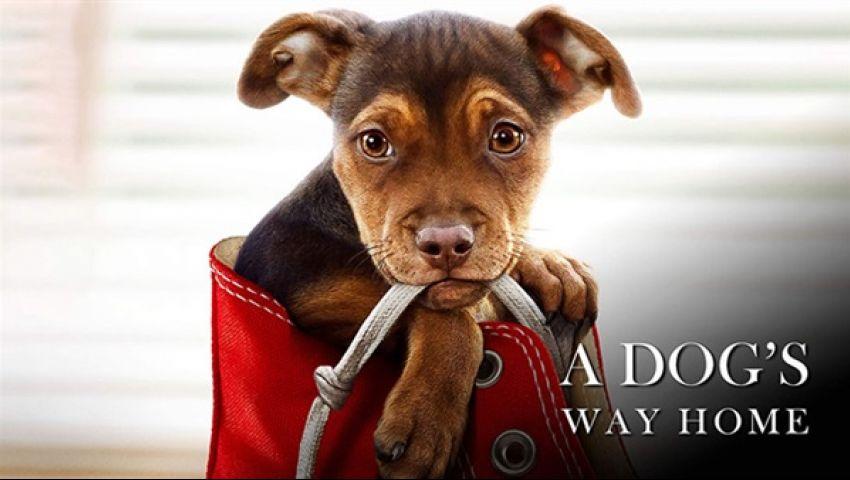 الكلبة «بيلا» تعبر الحدود في «A Dogs Way Home»