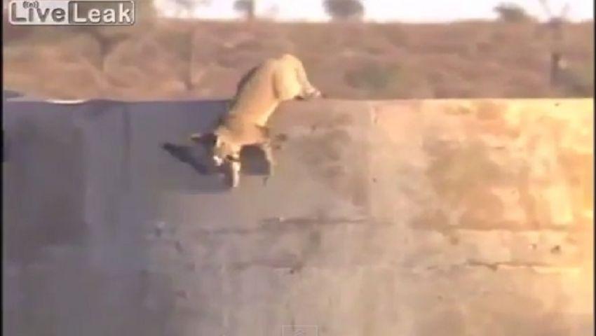 فيديو.. نسر يطارد قطًا  للحصول على حمامة