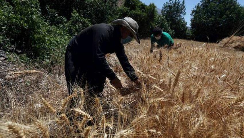 الفرنسية: في العراق.. مَن وراء حرائق المحاصيل ؟