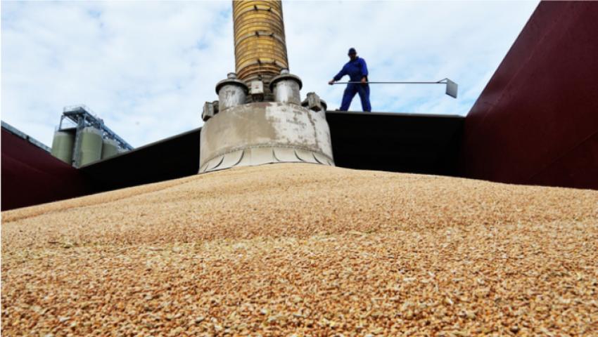 صحيفة ألمانية: أسعار القمح ترتفع عالميًا بسبب مناقصات مصر
